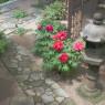 24_kichijoji-(6)